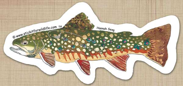 Brook Trout Sticker (Pilot)